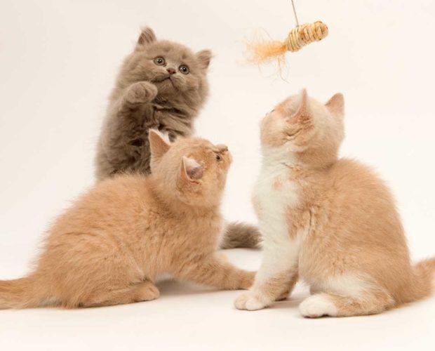 New feline member - what to expect - blog