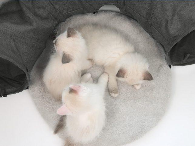 Round Cushion