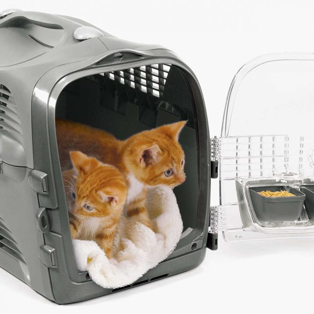 Converts into a cozy cat bed