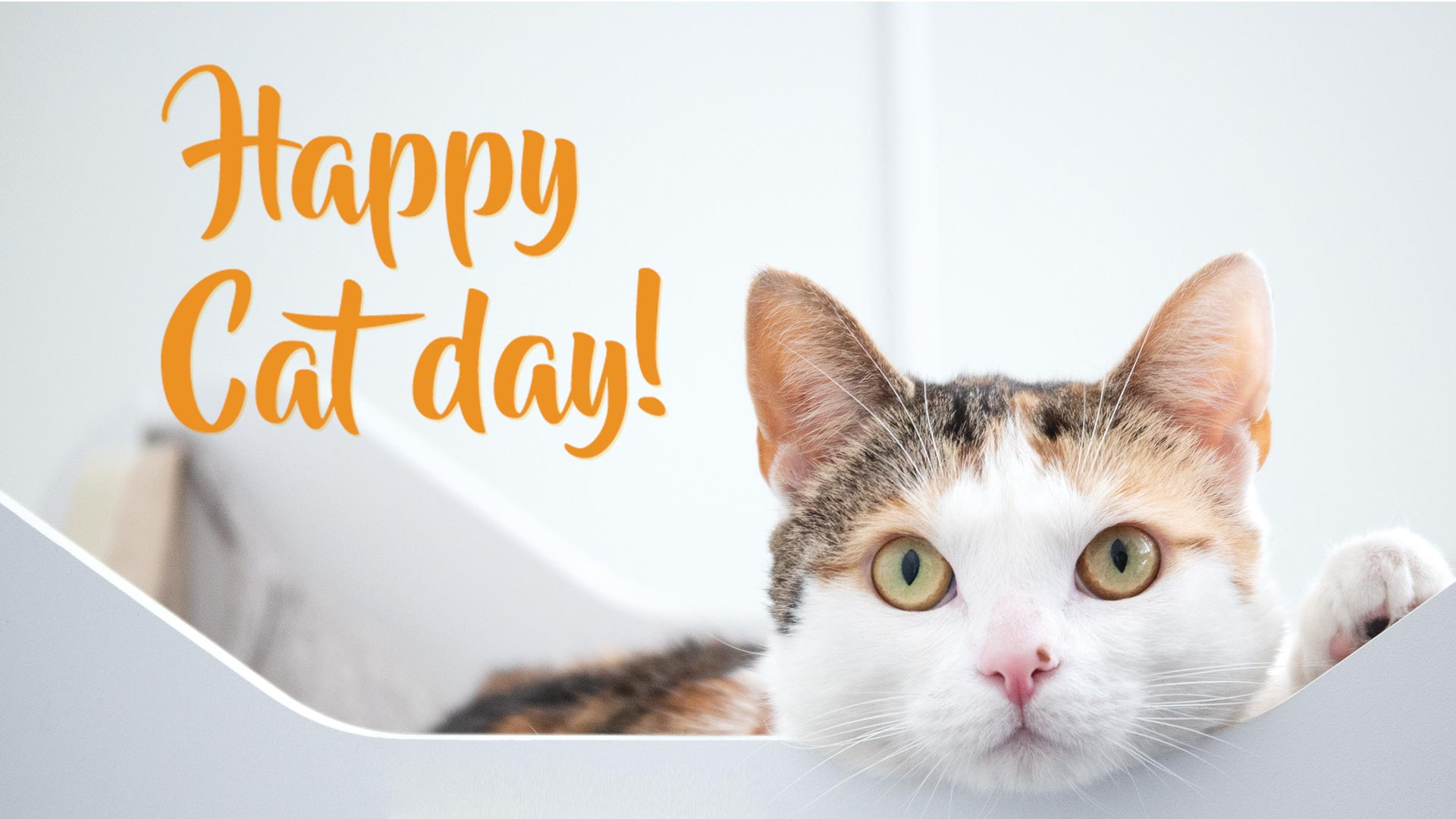 happy cat day Featured Image