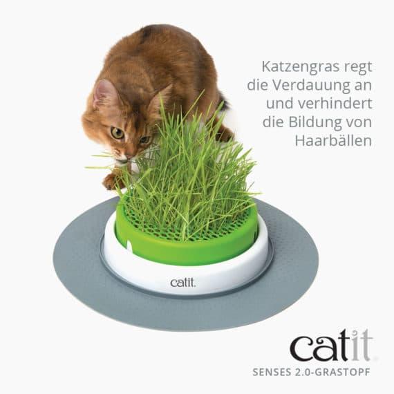 Catit Senses 2.0 Grastopf - Katzengras regt die Verdauung an und verhindert die Bildung von Haarbällen