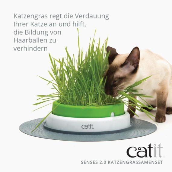 Catit Senses 2.0 Katzengrassamenset - Katzengras regt die Verdauung Ihrer Katze an und hilft, die Bildung von Haarballen zu verhindern