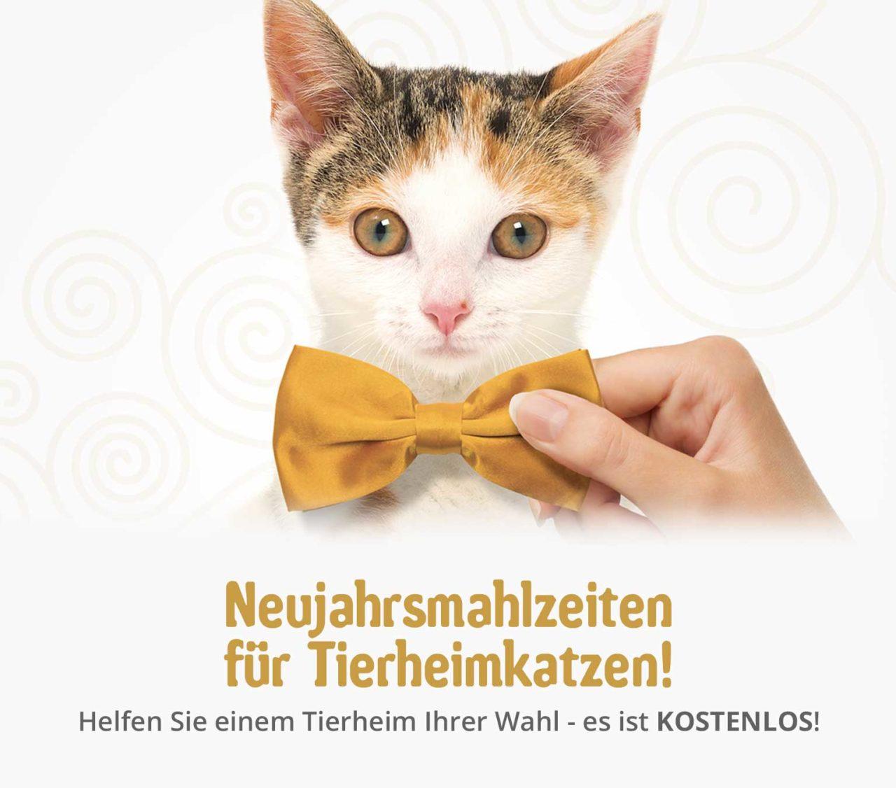 Neujahrsmahlzeiten für Tierheimkatzen!