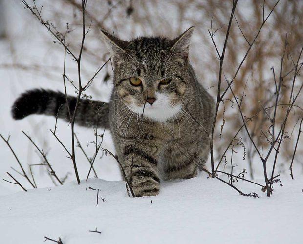 Wie Sie Ihre Katze gut und sicher durch den Winter bringen